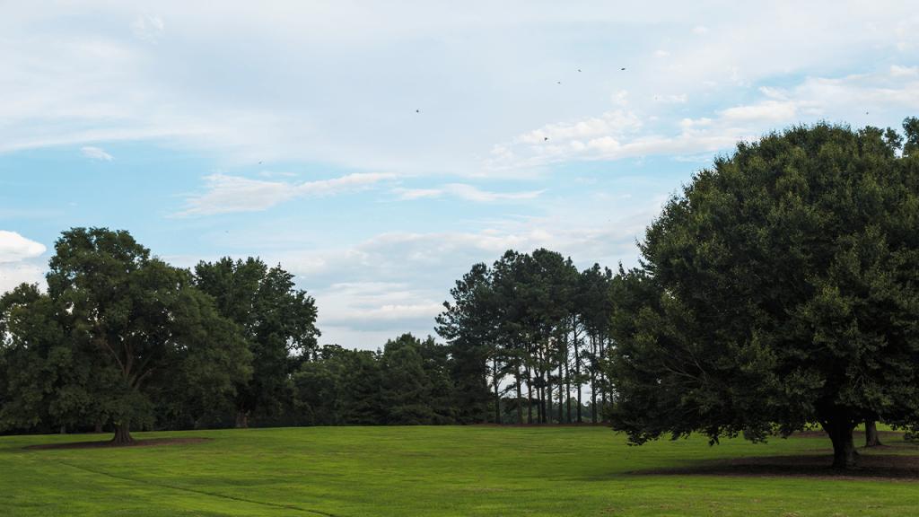 Williston South Carolina Trees